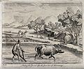 Agriculture; raking rice paddies in China with an ox-drawn p Wellcome V0025720.jpg