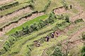 Agriculture in Bhutan 01.jpg