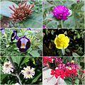 Alguns exemplares da flora de Santa Leopoldina - ES.jpg