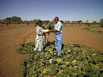 Agriculture in Zimbabwe - Venda farmers in the South of Zimbabwe.
