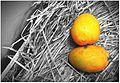 Alphanso (Haapus) Mango.jpg