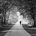 Alter Postweg - Waldweg in Olfen - Sascha Grosser.jpg