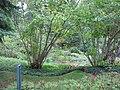 Aménagement paysager à la Villa Estevan, aux Jardins de Métis, Grand-Métis, Québec - panoramio (8).jpg