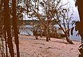 Amazonas (1992) - panoramio.jpg