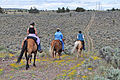 American Competitive Trail Horse Ride (7336786558).jpg