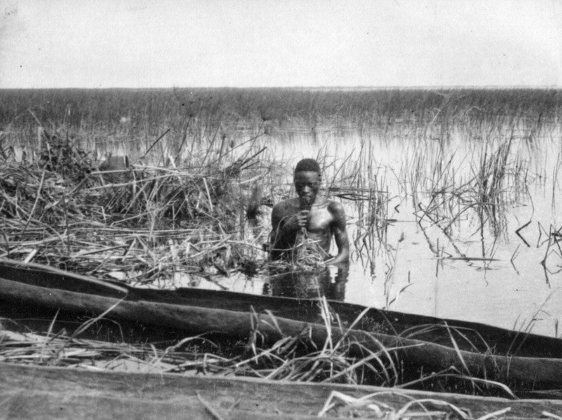 File:Ant. Batwa som hämtar upp en näckrosrotstock. Märk kanoternas ringa bredd - SMVK - 000482.tif