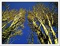 April Parc Natural Mundenhof Freiburg - Master Botany Photography 2013 - panoramio (3).jpg