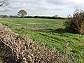 Arable land by Littleworth Drove - geograph.org.uk - 599954.jpg