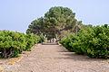 Archaeological site Nora - Pula - Sardinia - Italy - 25.jpg