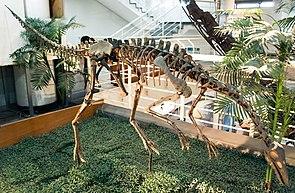Skelettnachbildung von Archaeornithomimus