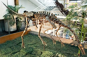 Archaeornithomimus - Archaeornithomimus asiaticus model on display at the Paleozoological Museum of China