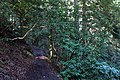 Around Geroldsau Waterfall 2020-03-13 06.jpg