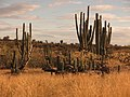 Atardecer Parque Natural Regional La Tatacoa.jpg