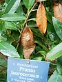 Attacus atlas-botanical-garden-of-bern 30.jpg