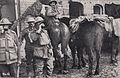 Australia postcard Comforts Fund Our Boys at the Front Coffee.jpg