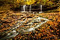 Autumn Carpet (126633555).jpeg