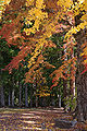 Autumn Koyasan Wakayama04s5s4272.jpg
