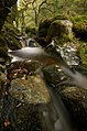 Autumn Pool - Portrate (4040560002).jpg