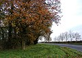 Autumnal Trees beside the A165 - geograph.org.uk - 287814.jpg