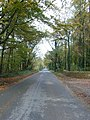 Autumnal avenue - geograph.org.uk - 276941.jpg