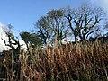 Autumnal colour in Coed Allt Clyn - geograph.org.uk - 1550575.jpg