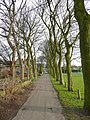Avenue of trees, Almondbury - geograph.org.uk - 730504.jpg