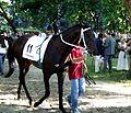 Az év galopp lova 2010 Tutanhamon.JPG
