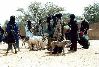 Sahel - Sahel people with livestock and azawakh dogs