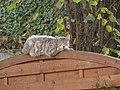 Bad Rappenau - Bonfeld - graugestromte Katze auf Holzzaun.JPG