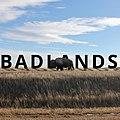 Badlands Bison.jpg