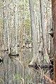 Bald Cypress Trail First Landing State Park-trees-2 (33208572615).jpg