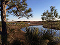 Bald Head Island Marsh.jpg