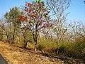 Bandipur Tiger Reserve - panoramio (26).jpg