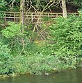 Banks of the River Esk - panoramio.jpg