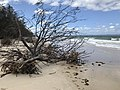 Beach erosion at Woorim beach, Bribie Island, Queensland 03.jpg