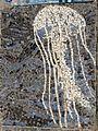 Belgrade zoo mosaic0098.JPG