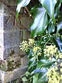 Benchmark on wall of Stenton Close outside ^66 Baker Street - geograph.org.uk - 2096612.jpg