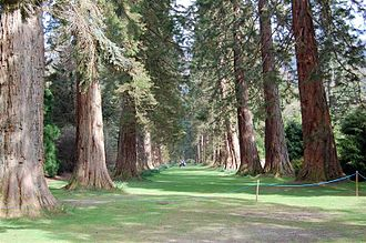 Royal Botanic Garden Edinburgh - The avenue of Giant Redwoods at Benmore