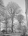 Beuken, Landgoed de Nienhof, Bestanddeelnr 166-0119.jpg