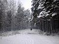Biķernieku mežs.JPG