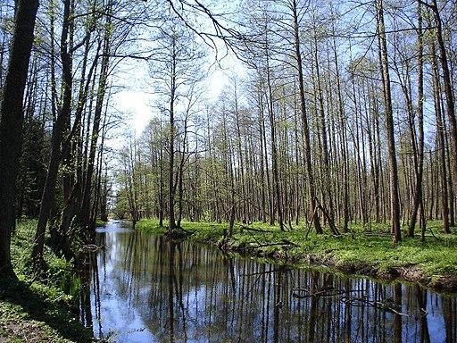 Bialowieza Deby rzeka Barry Kent