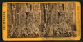 Big Tree - Wm. Cullen Bryant, near view. Calaveras Group, by Lawrence & Houseworth 3.png