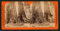 Big trees, Old Dominion and Uncle Tom's Cabin. Mammoth Grove, Calaveras County, by Lawrence & Houseworth.png