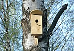 Bird house in Korolyov, Moscow Oblast.jpg