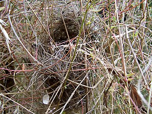 Nest in grass