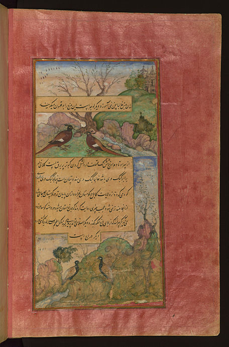 Birds of Persia luchas, called buqalamun (bwqlmwn turkey in Persian), and partridges Birds of Hindustan luchas, called buqalamun, and partridges.jpg