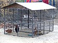 Bishnoi - Hühnerstall.jpg