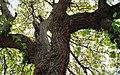 Bit Tree In The Sun (44834428).jpeg