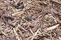 Black crickets - Flickr - p a h.jpg
