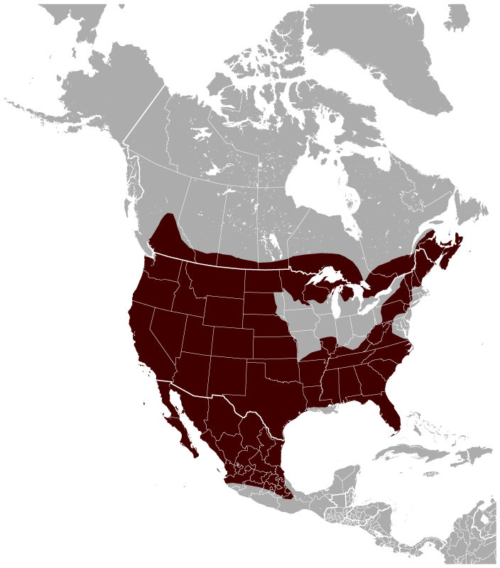 Bobcat Lynx rufus distribution map.png